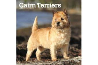 Cairn Terriers 2019 Square Wall Calendar