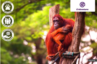 BORNEO: 8 Day Borneo East Sabah Adventure for One or Two