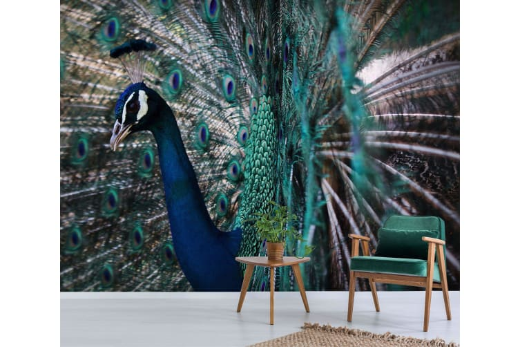 3D Peacock Side Face 219 Woven paper (need glue), XL 208cm x 146cm (WxH)(82''x58'')