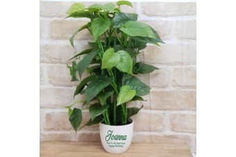 Real Touch Philodendron in Personalised Birthday Pot