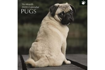 Pugs - 2020 Premium Square Pets Dogs Wall Calendar 16 Months New Year Xmas Decor